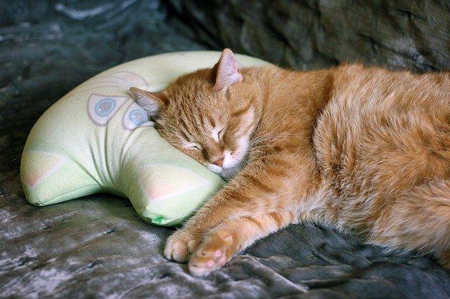 爆睡確定の超快適な魔法の快眠枕、まとめ