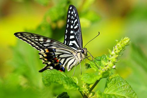 アゲハ蝶は変容・飛躍