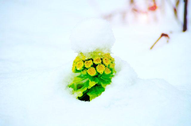 二十四節気2月4日より立春。おすすめハーブはジンジャーとペパーミント