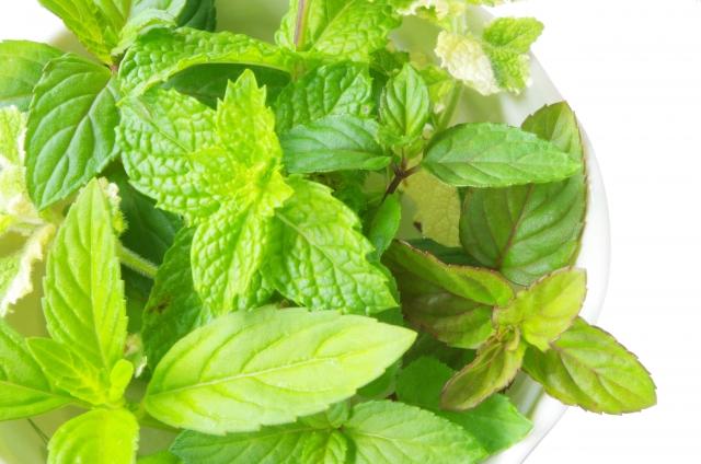 ミント(薄荷)は立春の魔法ハーブ。特に風邪で喉が痛い時に。