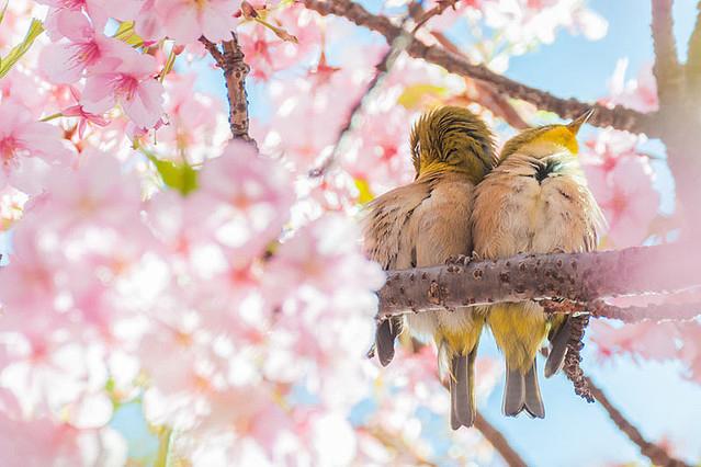 二十四節気 3月21日より春分。おすすめハーブはホーリーバジルとよもぎ