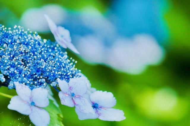 二十四節気 6月6日より芒種。おすすめ魔法ハーブはウドとわさび