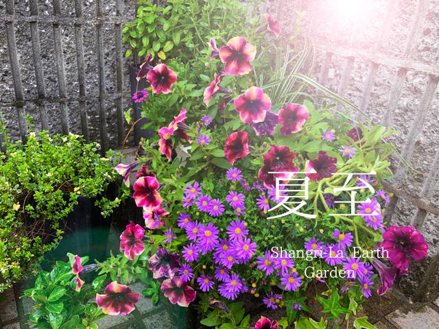 二十四節気   6月22日より夏至。おすすめ魔法ハーブはローリエとパチョリ