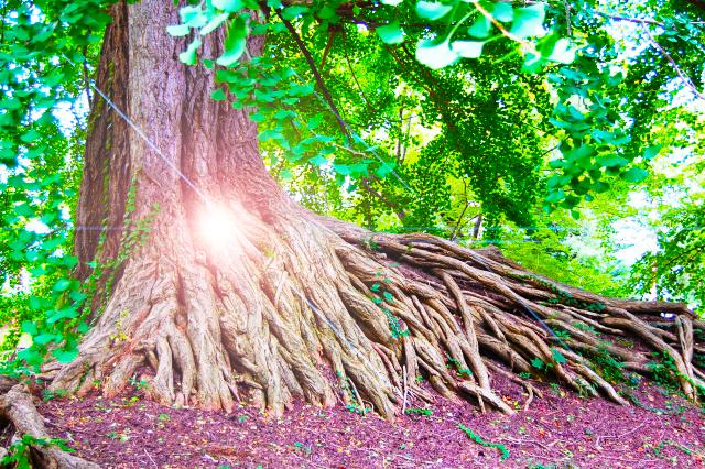 人も植物も根っこから出来ている。土壌改良しないと花は咲かない