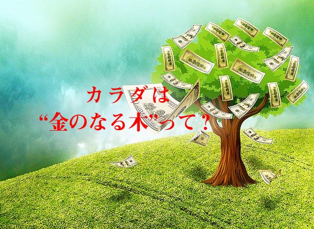女性実業家と血について②カラダは金のなる木って?
