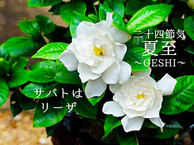 二十四節気   6月21日より夏至。魔女暦サバトはリーザ☆魔法ハーブはローリエとパチョリ
