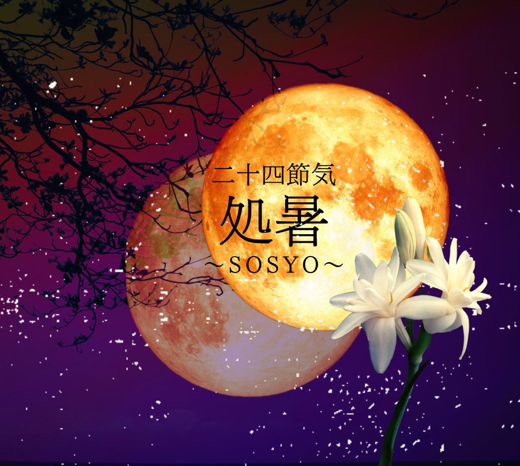 二十四節気 8月23日より処暑。魔法ハーブはアガベ(月下香)