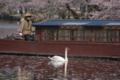 京都新聞写真コンテスト 相棒