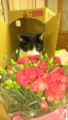 りょうまと花