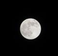 月齢14(2011.11.10)ほぼ満月