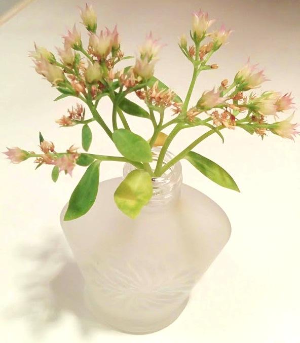 空き瓶を活用した花瓶