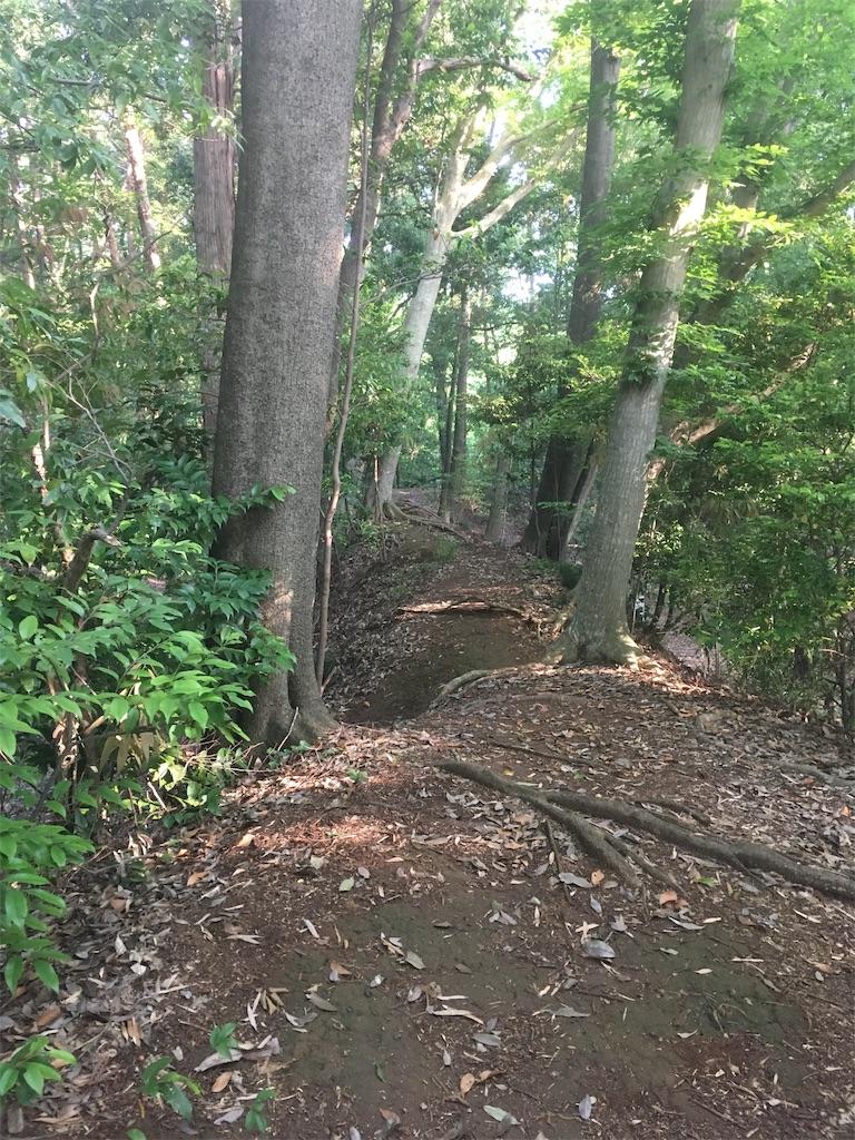 f:id:run-trail:20200530141306j:image