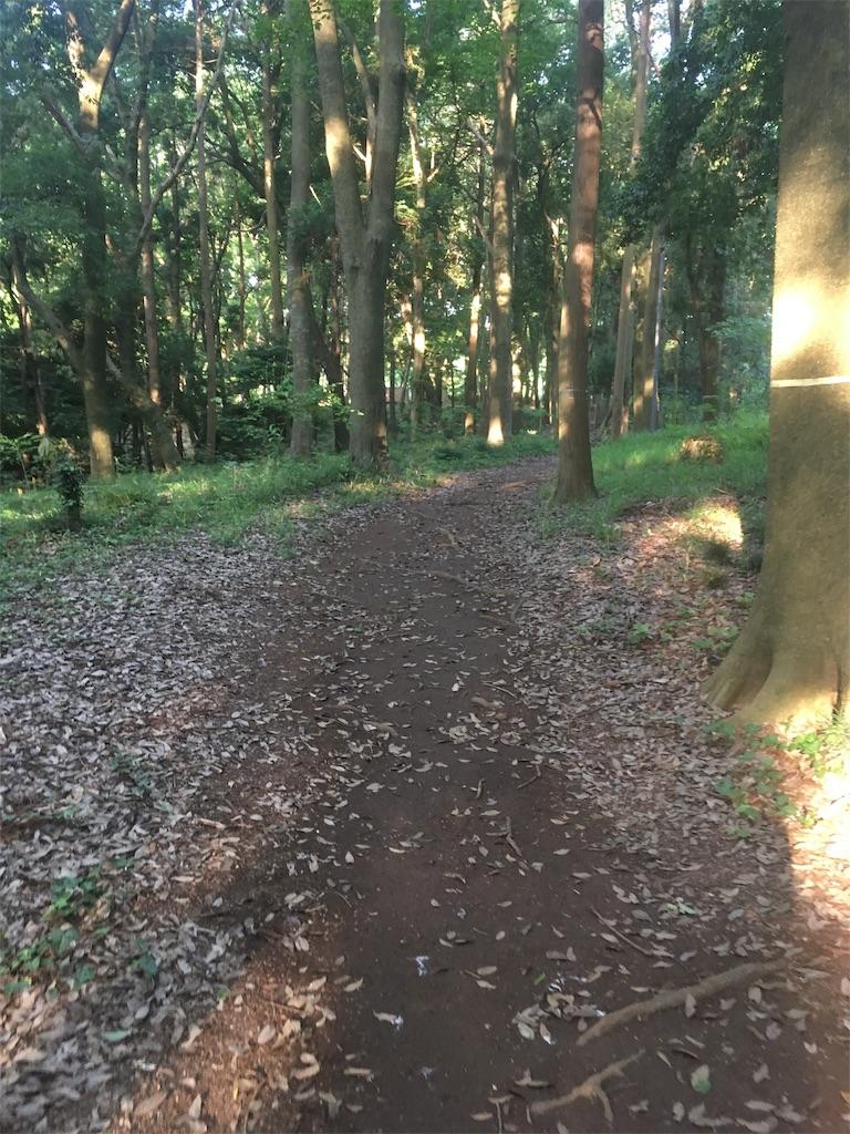 f:id:run-trail:20200530141312j:image