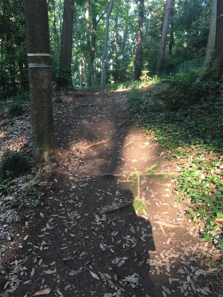 f:id:run-trail:20200530213131j:image