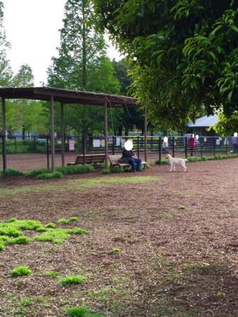 舎人 公園 ドッグラン