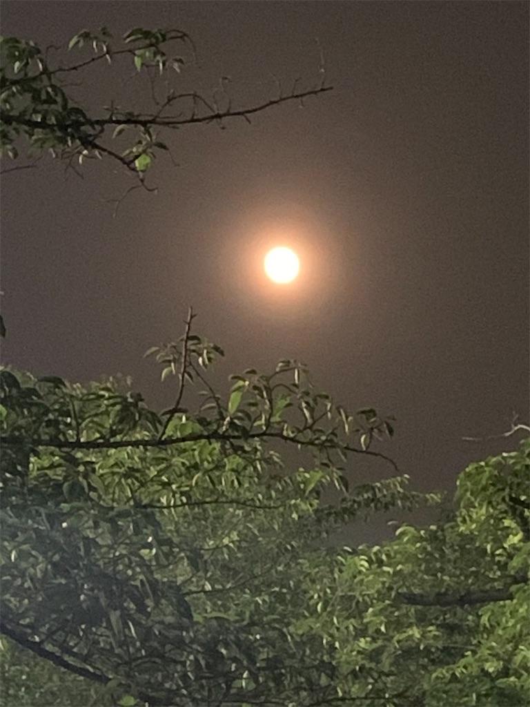 f:id:ruri-iro-thalassa:20200610200842j:image