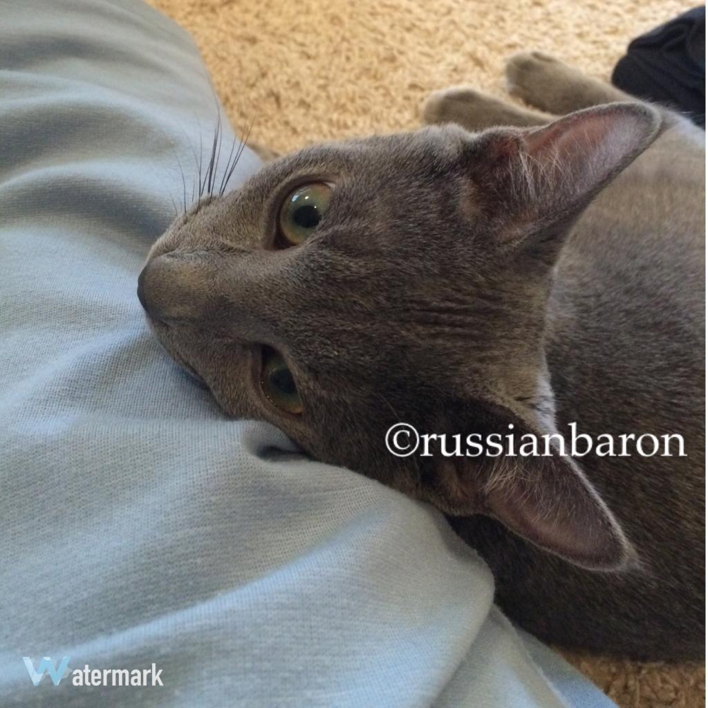 f:id:russianbaron:20170120144041j:plain