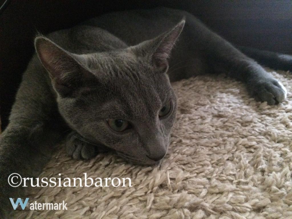 f:id:russianbaron:20170126222811j:plain