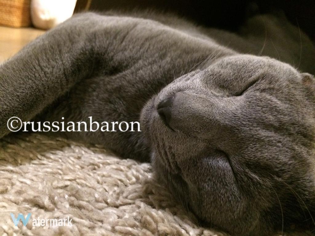 f:id:russianbaron:20170203173944j:plain