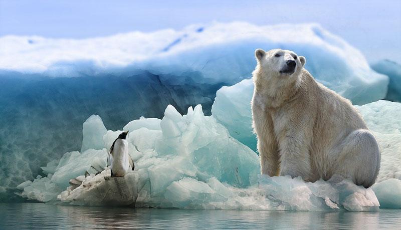 シロクマを見つめるペンギンとさらに何かを見つめるシロクマ