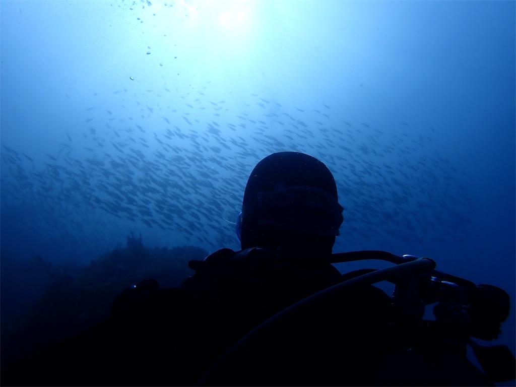 魚も増える秋の海