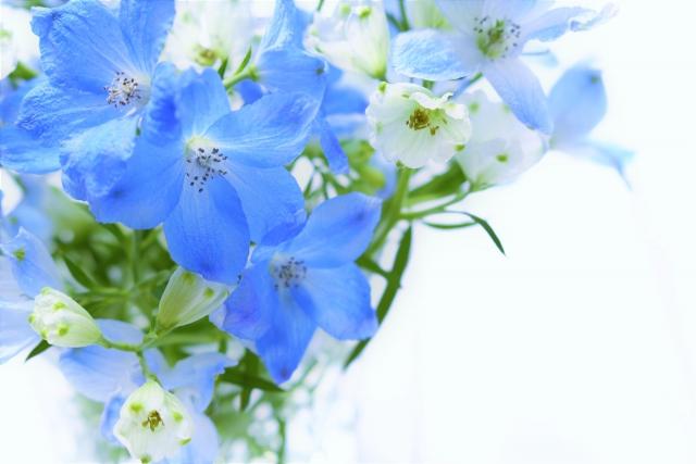 優しいお花のイメージ