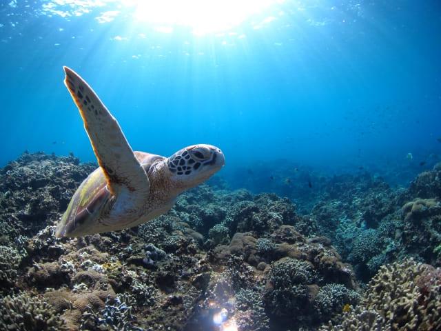 ダイビング初めてウミガメに会いたい