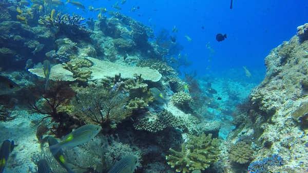 沖縄 慶良間の海