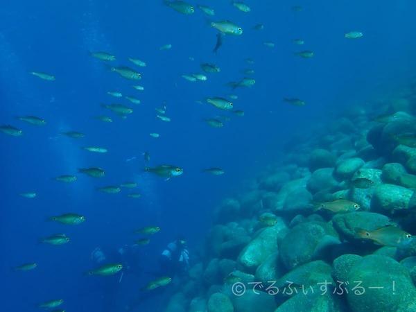 魚群がすごい