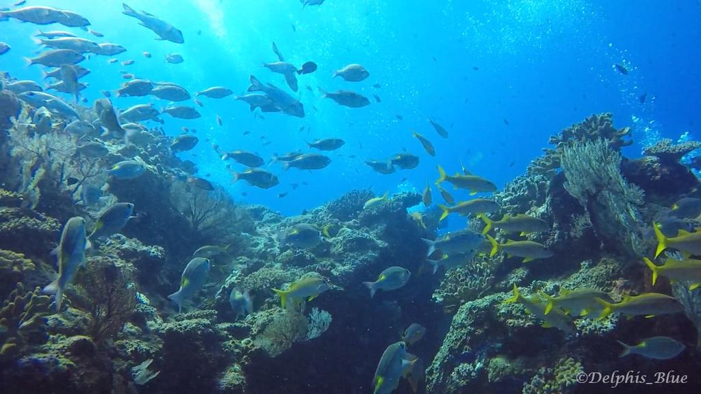 gopro写真 太陽と魚群