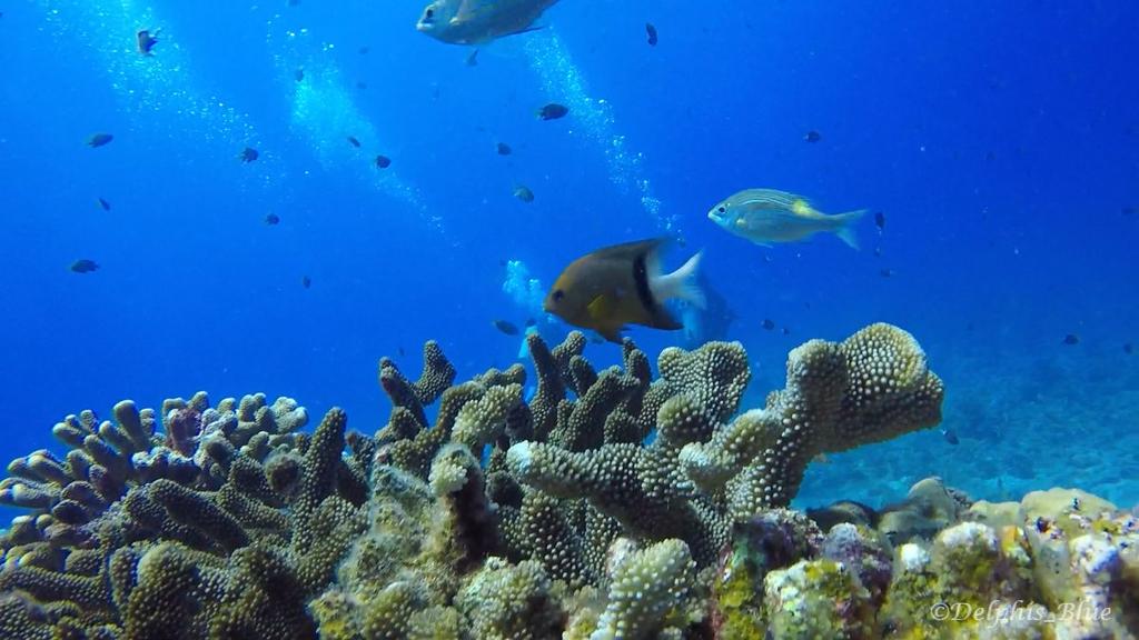 gopro写真 サンゴとお魚