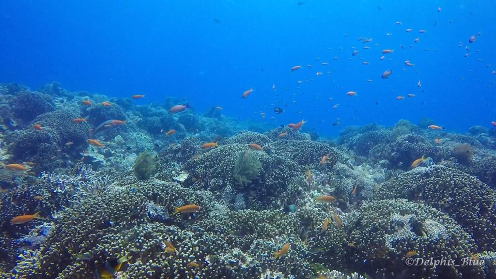 gopro写真 サンゴとキンギョハナダイ