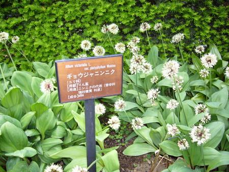 f:id:ryamagishi:20060616141046j:image:w320