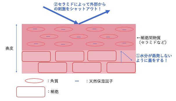 f:id:ryo101327223:20200518150058p:plain