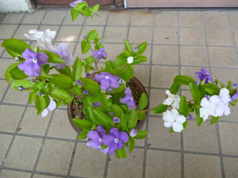 f:id:ryo326:20120522124737j:image