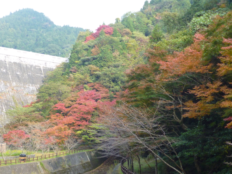f:id:ryo326:20121109143502j:image