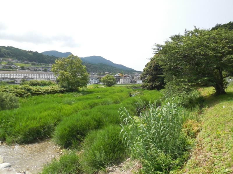 f:id:ryo326:20150621140236j:image
