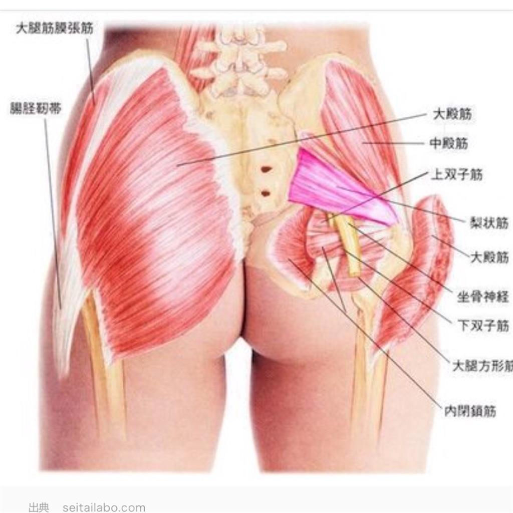 トリガー 梨 ポイント 状 筋 症候群