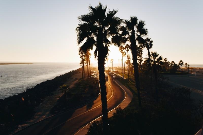 海とヤシの木