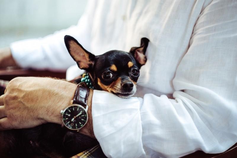 犬とビジネスマン