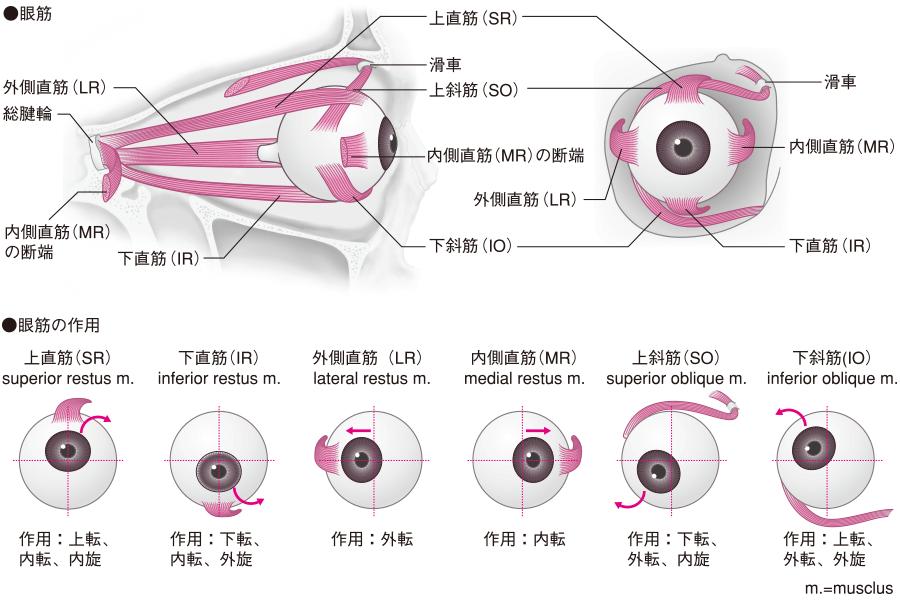 f:id:ryok-kobayashi:20200813161328p:plain