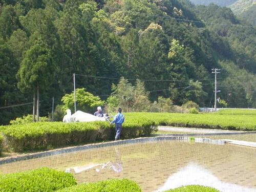f:id:ryokokuen:20100502195520j:image:left