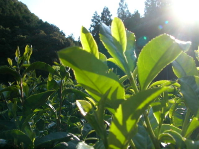 f:id:ryokokuen:20101007234303j:image