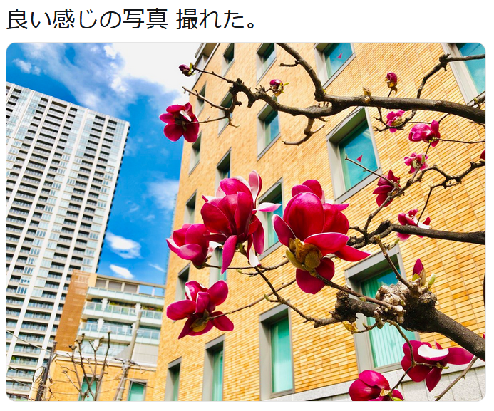 f:id:ryokuji:20190327094501p:plain