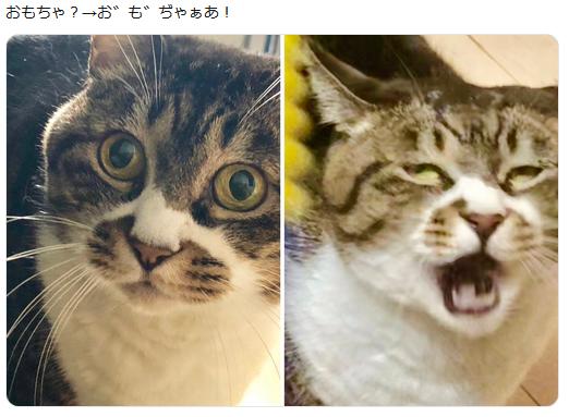 f:id:ryokuji:20191006230929p:plain