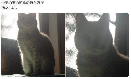 f:id:ryokuji:20191006234302p:plain