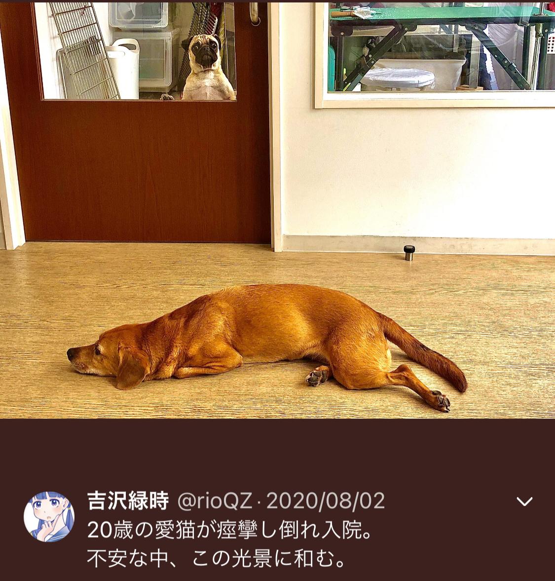f:id:ryokuji:20201212200546j:plain