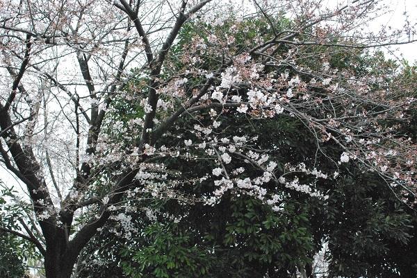f:id:ryokuyo-e:20170405133845j:plain