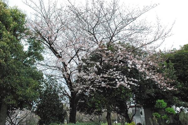 f:id:ryokuyo-e:20170406074903j:plain