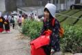 京都新聞写真コンテスト 人気の茶娘
